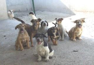 Caserta- SOS, 2 Dicembre serata di beneficenza per gli amici a 4 zampe del canile di Caserta