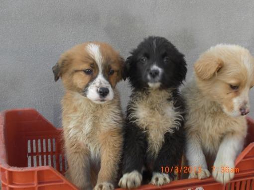 I tre cuccioli di cane trovati abbandonati in campagna