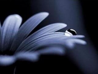 fiore lutto