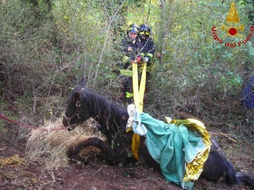 cavallo voragine  matese