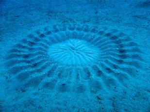 Cerchi-nel-mare-Adriatico