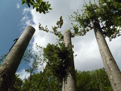 alberi 2tagliati san gregorio