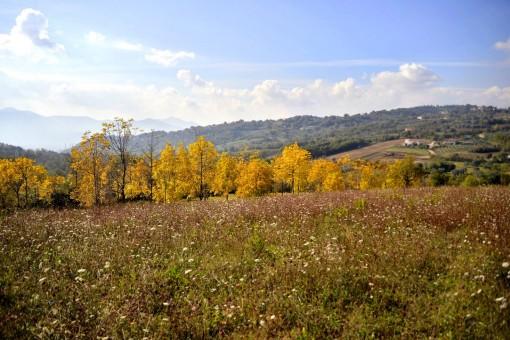 colline caiatine